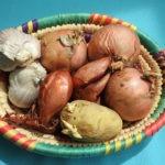ail, oignon, echalote : toxiques pour le yorkshire
